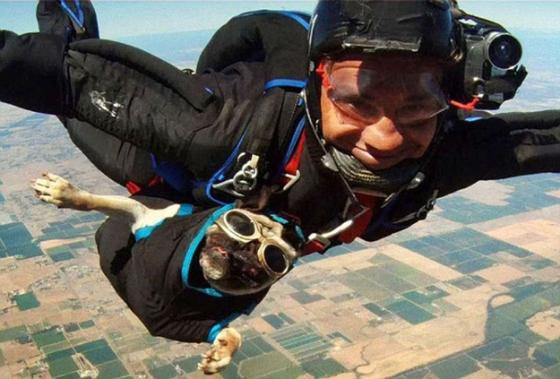 skydivingdog