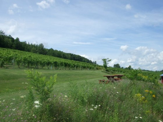 Bully Hill Vineyards, Keuka Lake on Under the Oaks blog: Dreaming of... Upstate New York