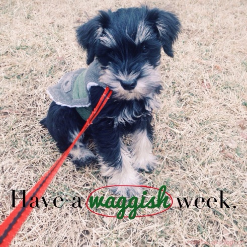 Under the Oaks : Have a waggish week.