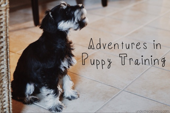 Under the Oaks : Adventures in Puppy Training