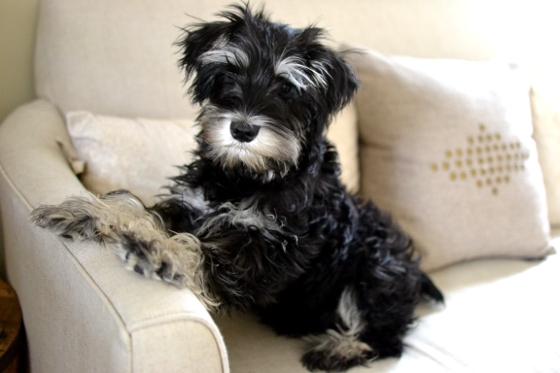 Under the Oaks : DIY Puppy Potty Bell