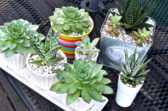 Under the Oaks blog : DIY Succulent Gardens